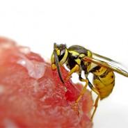 Kaj storiti ob pikih žuželk?